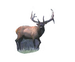 Elk Calls You Make From Our Call Making Materials How To Make Supplies