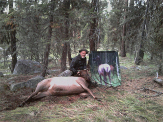 Cow Elk Decoy2011